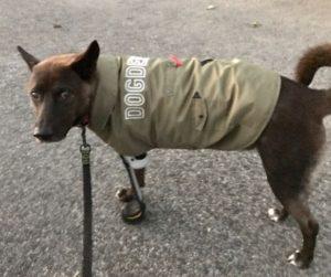 「坂上忍 犬 サンタ」の画像検索結果
