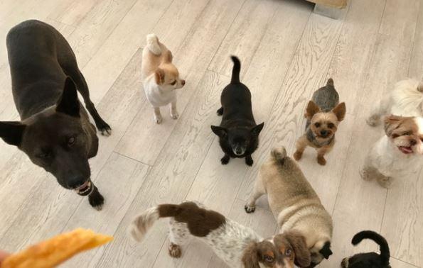 「坂上忍 犬」の画像検索結果